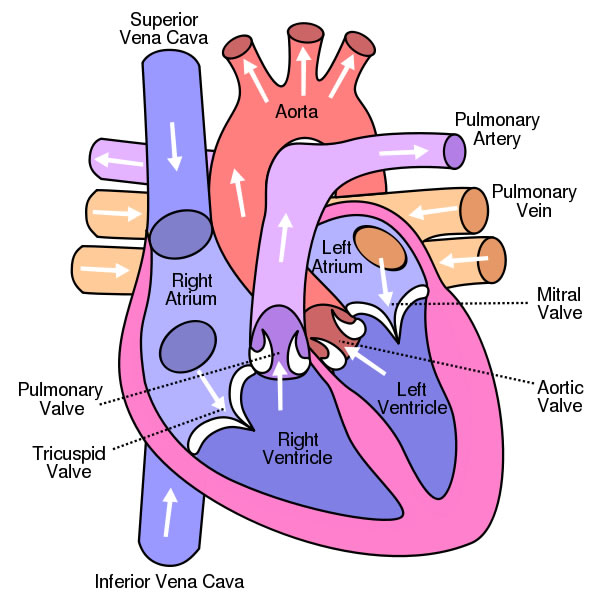 جراح قلب | جراح قلب مشهد | دکتر نظافتی | جراح قلب خوب | بهترین جراح قلب مشهد | بهترین جراح قلب ایران | جراح قلب خوب مشهد | جراح قلب ایران | جراح قلب خوب ایران | قلب